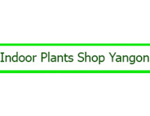 Indoor Plants Shop Yangon
